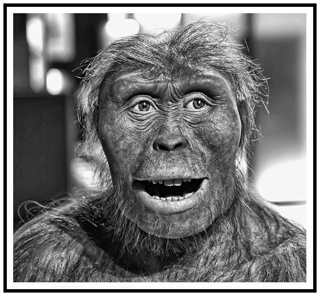 Homo Sapiens 01
