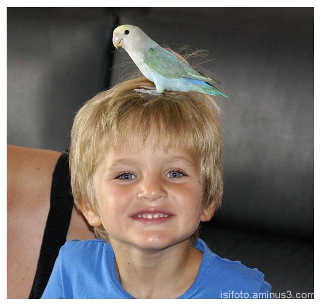 Gerard 4 anys - Gerard  4 years