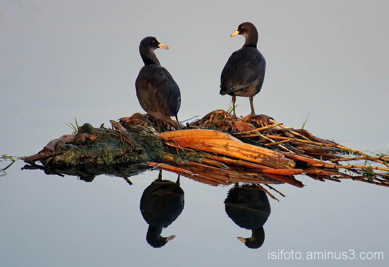 reflexos aus - birds reflections