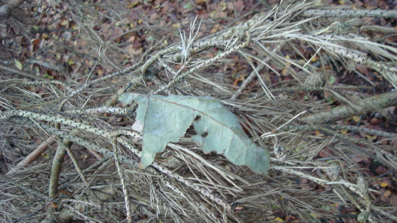 The lonely leaf