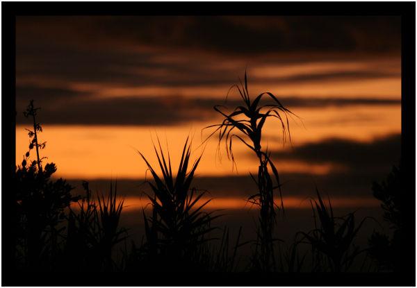 Hairy sunset