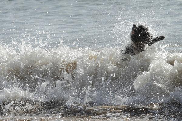 Wave? What wavbrlbrrblrbub?