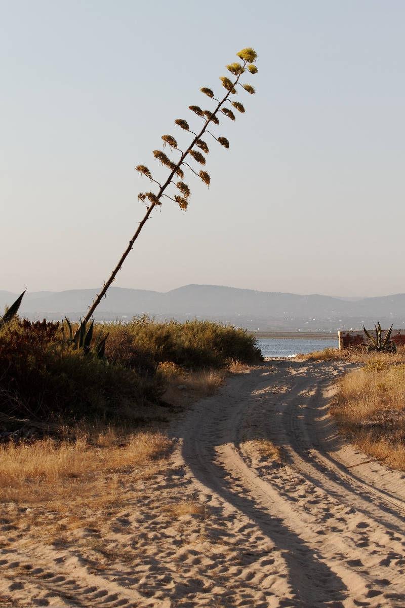 The beach is not far away...
