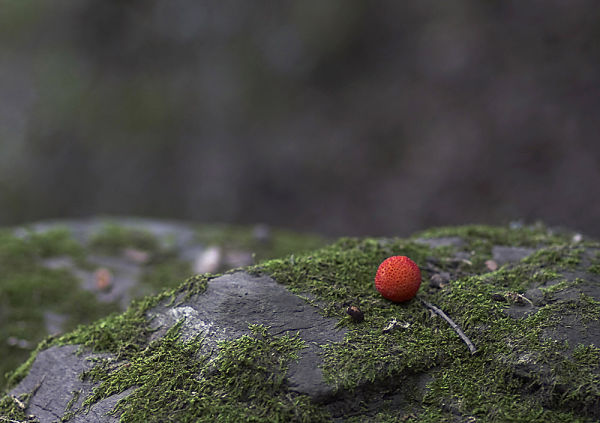 Minimal autumn