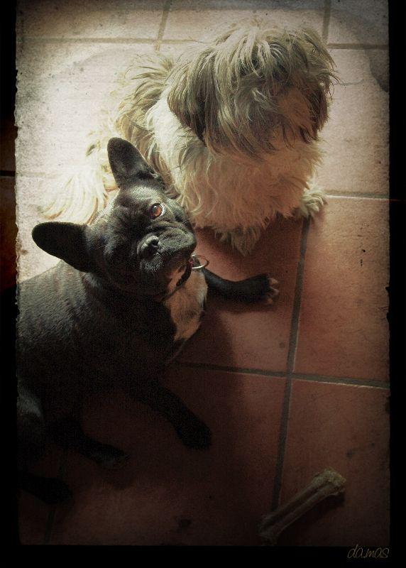 Miradas caninas