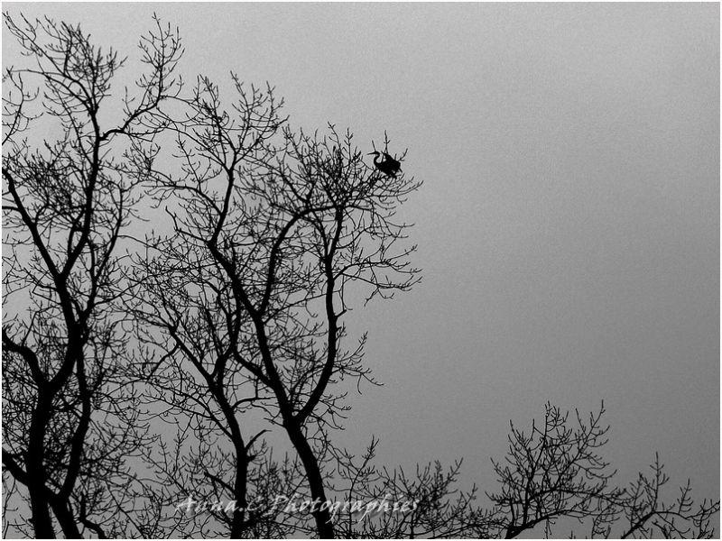 Le héron sur un arbre perché