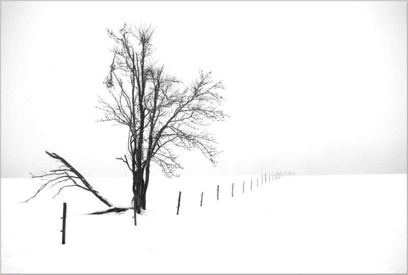 the old lonely tree