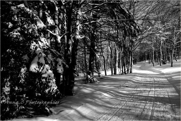 Sous la forêt blanche