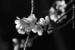 Ikebana spring