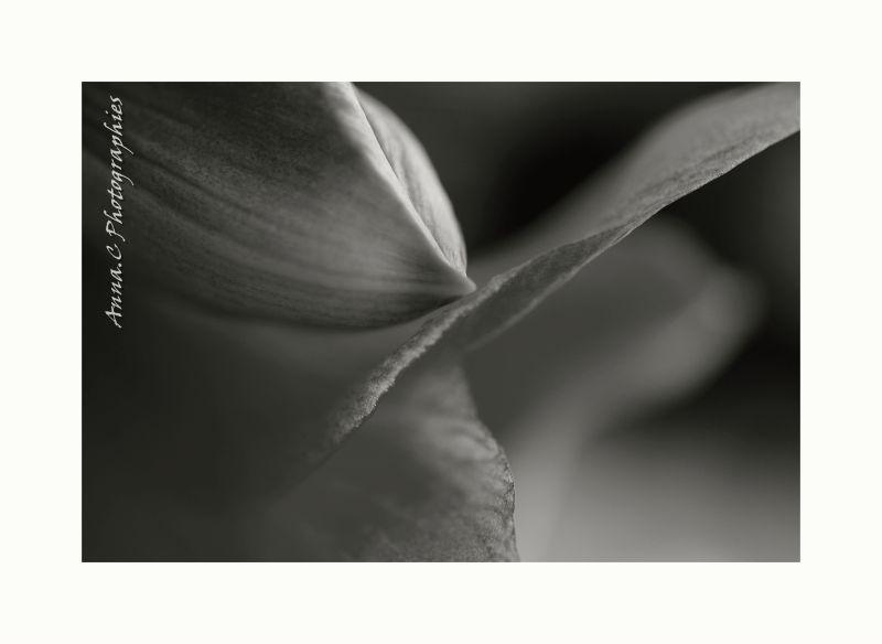 Battement d'aile d'une fleur
