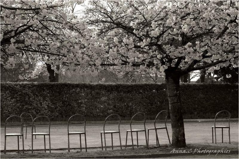 Les chaises musicales - le printemps de Vivaldi