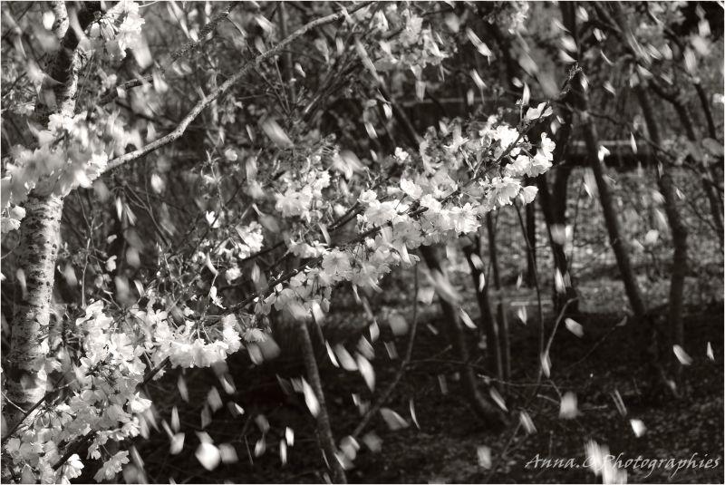neige florale