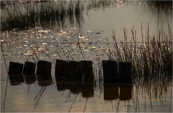 Les secrets du marais