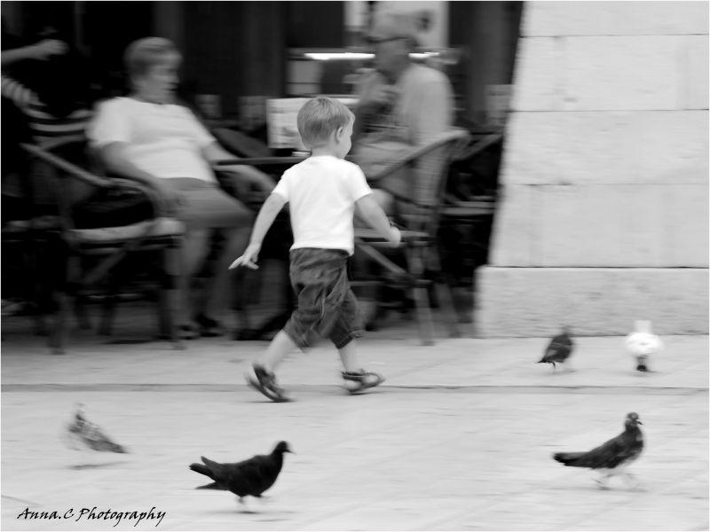 La ronde des pigeons