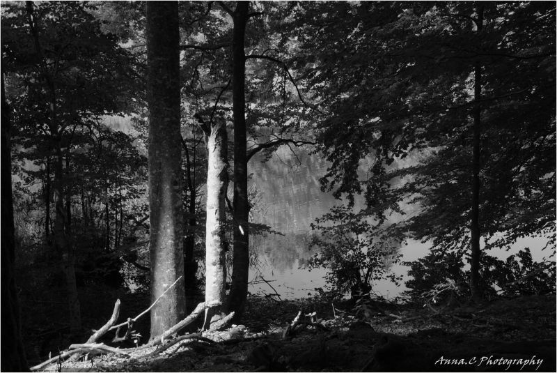Forêt de Plivice