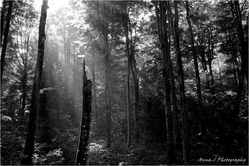 Mystères de la forêt