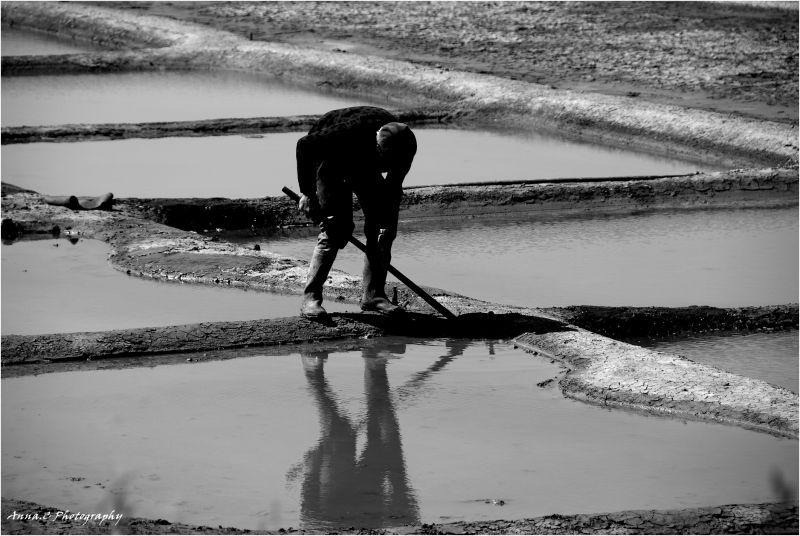 La travail du sel