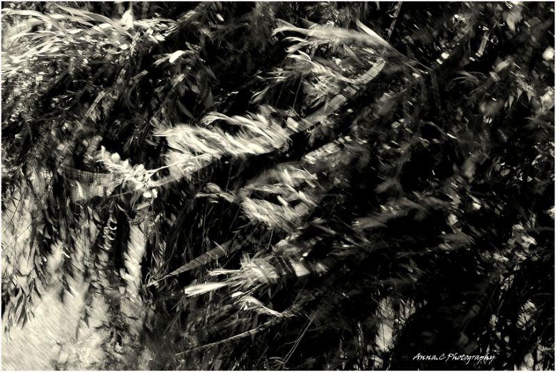 Le vent l