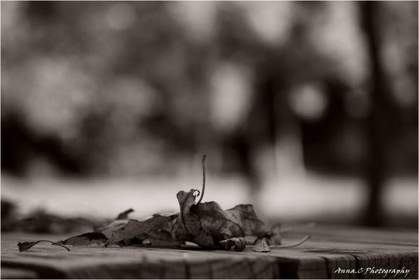 Spleen d'automne