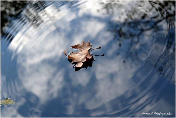 Des ronds dans l'eau #2
