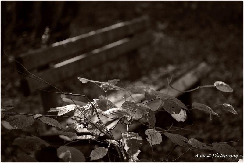 Un banc en automne