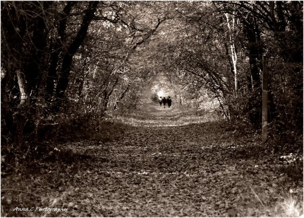 Autumn mood #4 Promenons nous dans les bois....