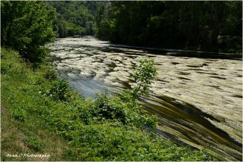 la rivière fleurie # 1