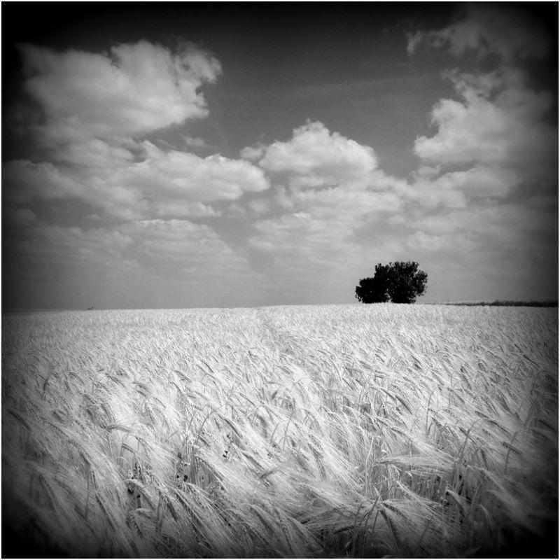 Seul dans les blés