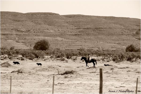 Road trip # 12 - Le gaucho et ses chiens