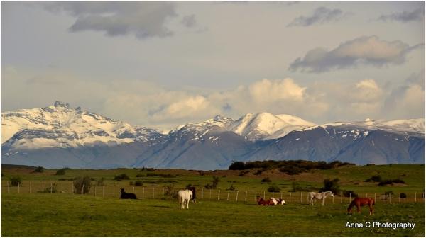 Les chevaux de Patagonie