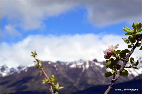 Springtime in Argentina