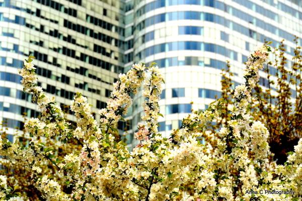 Printemps urbain / urban springtime