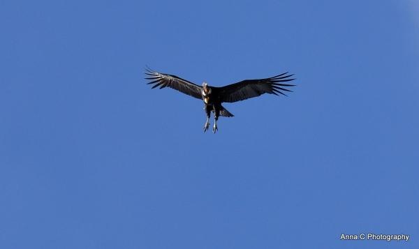 El  Condor pasa II - Atterrissage imminent