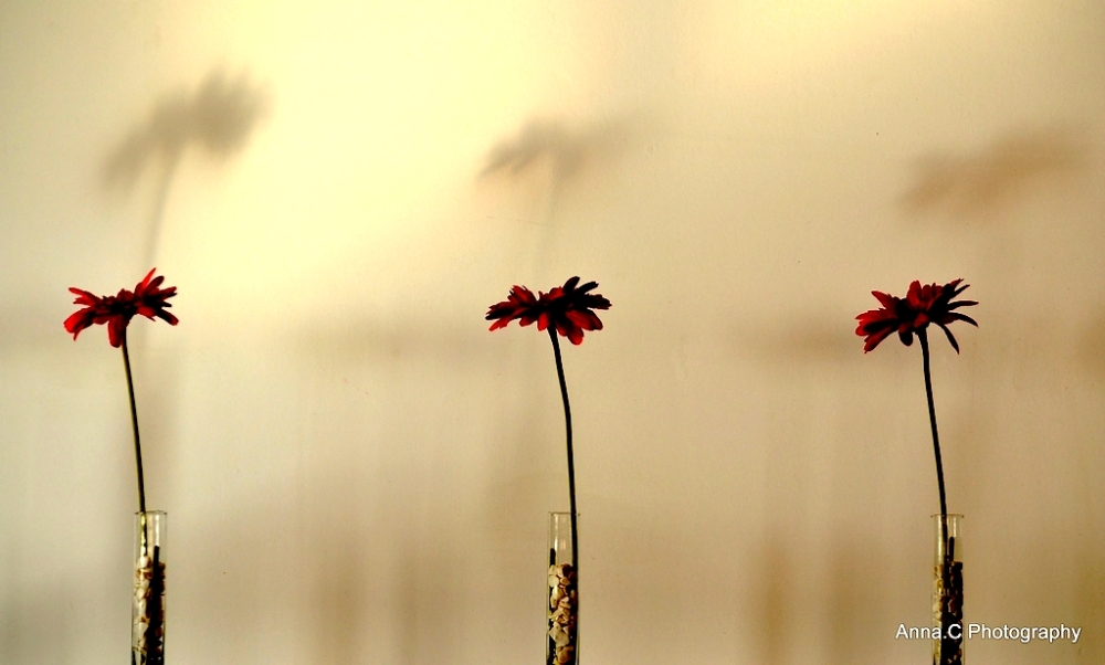 The Three Red Flowers