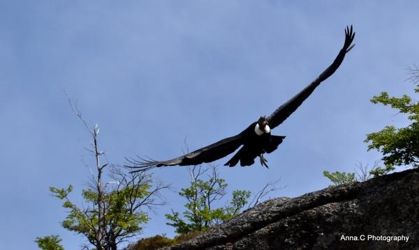 El Condor pasa IV - Le décollage