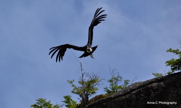 El Condor pasa V - Le décollage #2