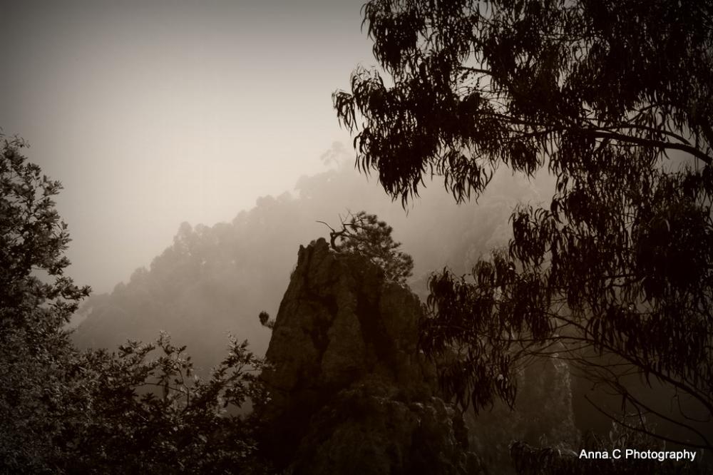 Eucalyptus song