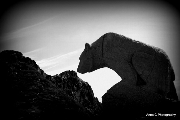 L'ours de Cantabrie