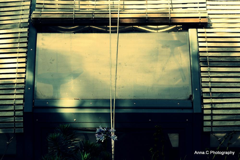 Fenêtre sur serre / window on greenhouse