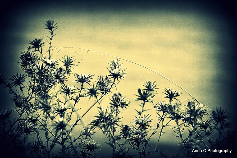 Fin de saison # 6 - herbes sèches