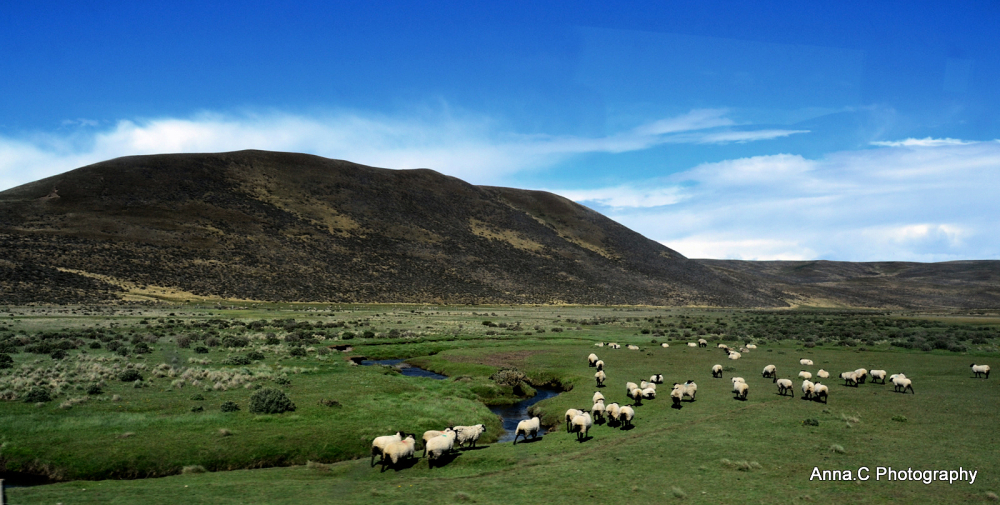 Tierra del Fuego # 6/6 Je compte les moutons...