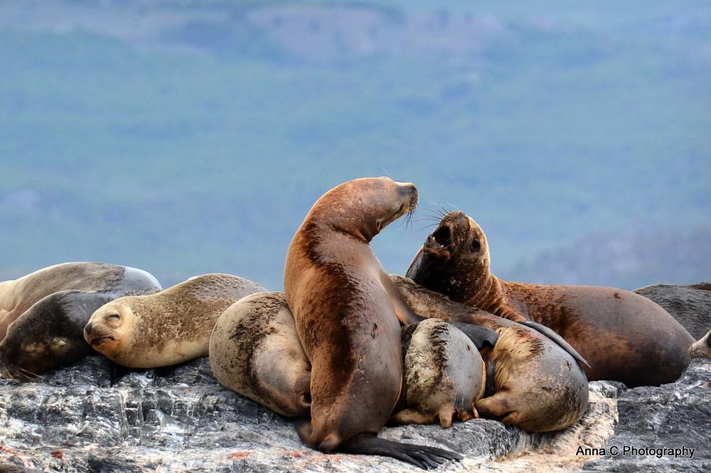 Ushuaia - Fin del Mundo # Le Canal de Beagle