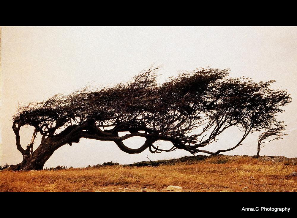 Ushuaia - Fin del Mundo # les arbres drapeaux