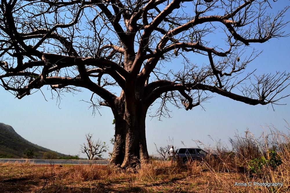Arrêt sous le baobab