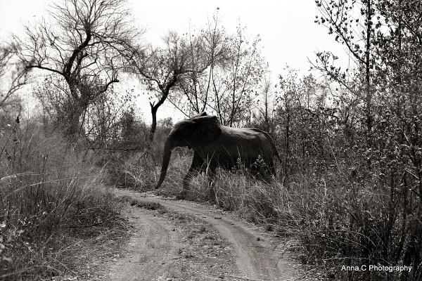 Le passage des éléphants # 1