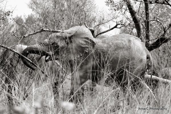 Le passage des éléphants # 2