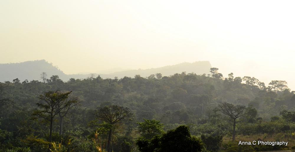 Au-delà de la forêt