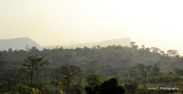 Au delà de la forêt