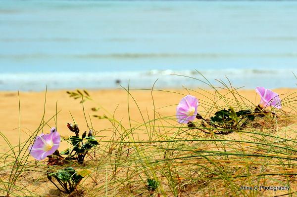 Entre dunes et océan
