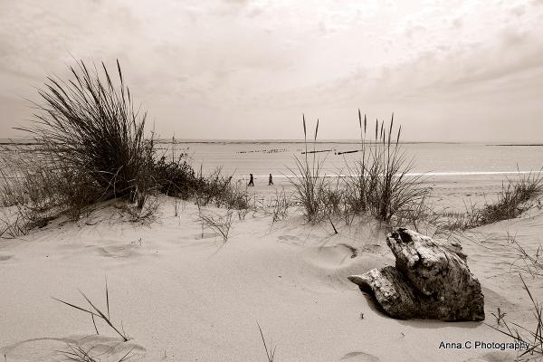 Douceur de dune # 1